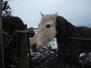 Horse in Barmby