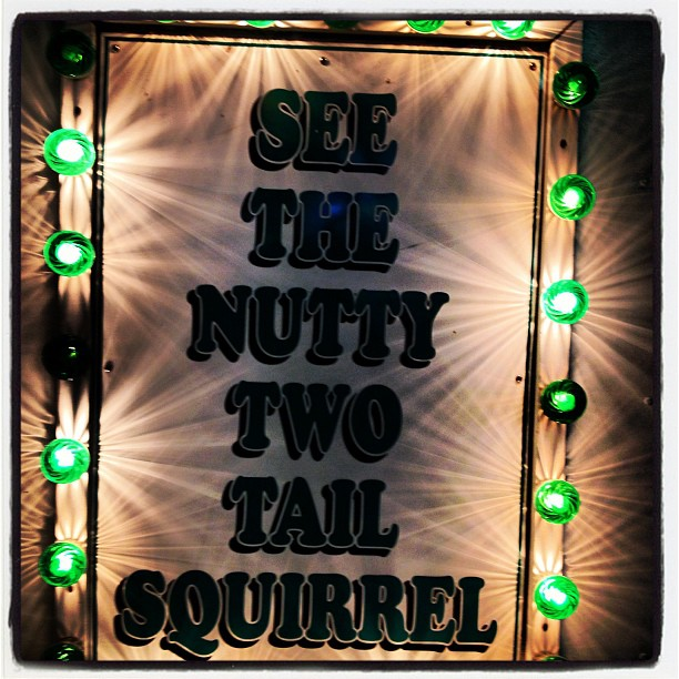 See the nutty two tail squirrel