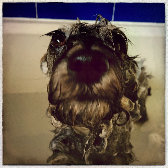Bath time for Olive