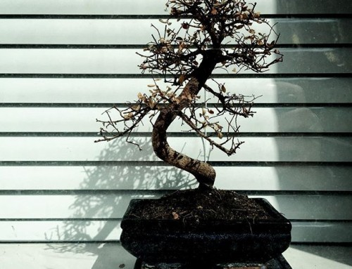 Bonsai // Scale Lane – Hull