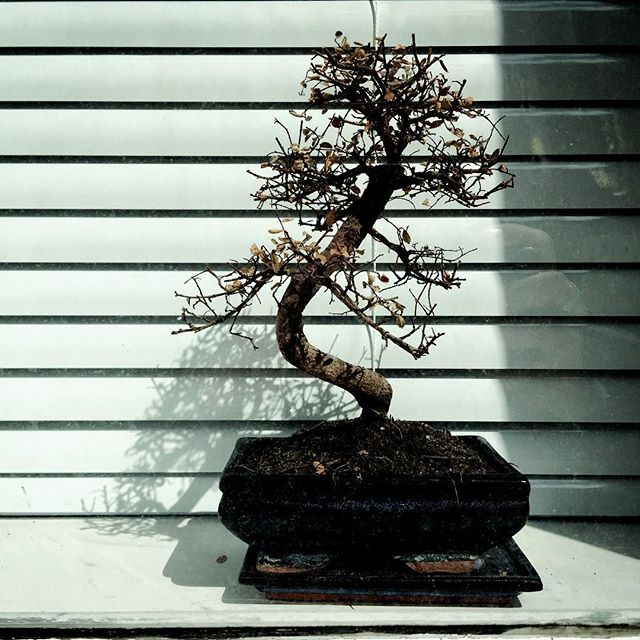 Bonsai // Scale Lane - Hull
